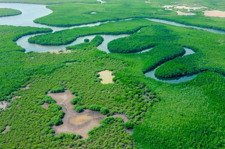 BBVA-deforestacion-bosque-vegetacion-naturaleza-arboles-medioambiente-proteccion-cuidado-planeta-tierra-rios