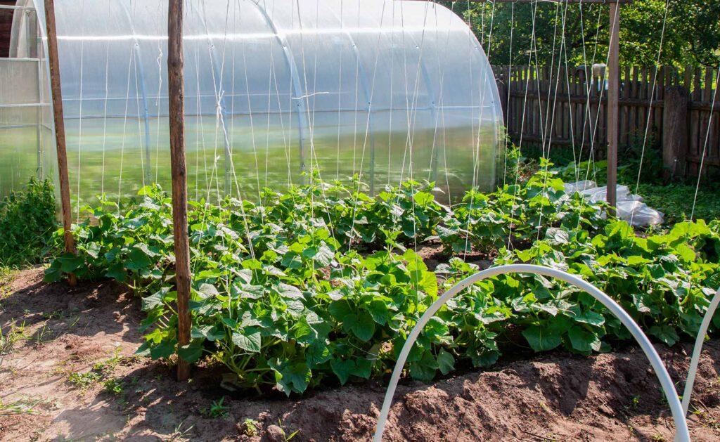BBVA-sostenibilidad-invernadero-casero
