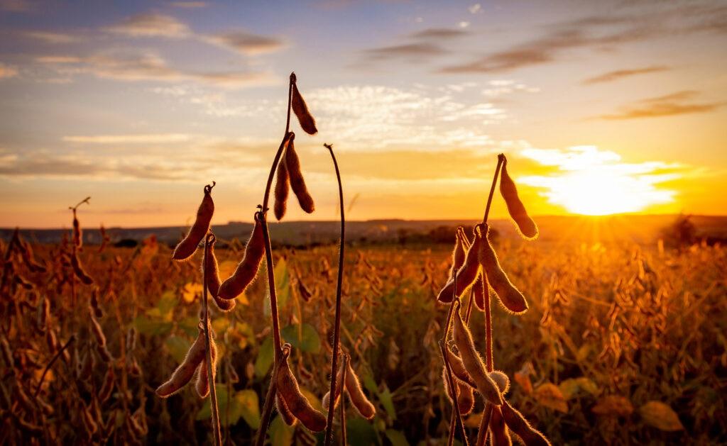 BBVA_COFCO-sostenibilidad-linea-sindicada-cib-plataforma negocios agrícolas