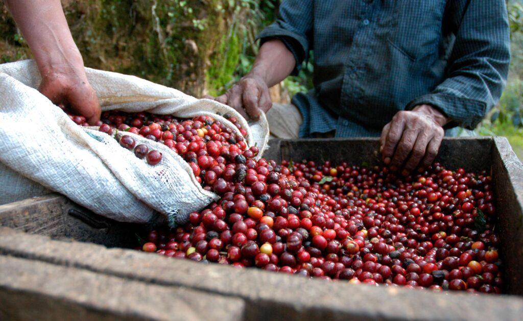 comercio-justo-sostenibilidad-bbva