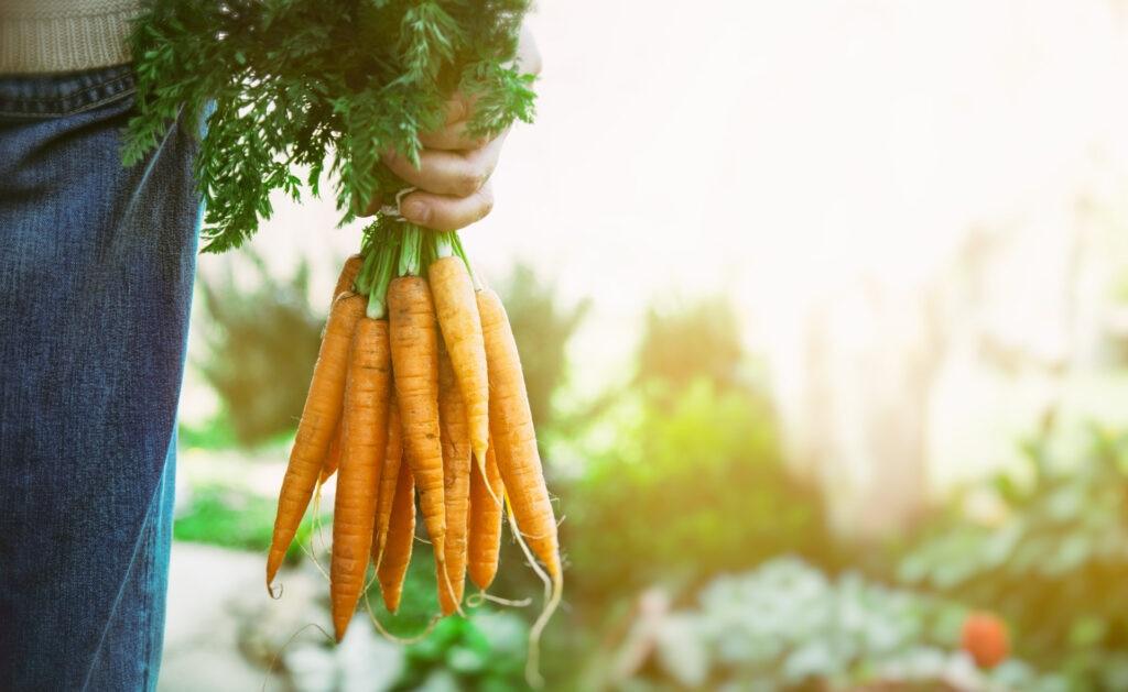 sostenibilidad-BBVA-productos-organicos-gastronomia-sostenible