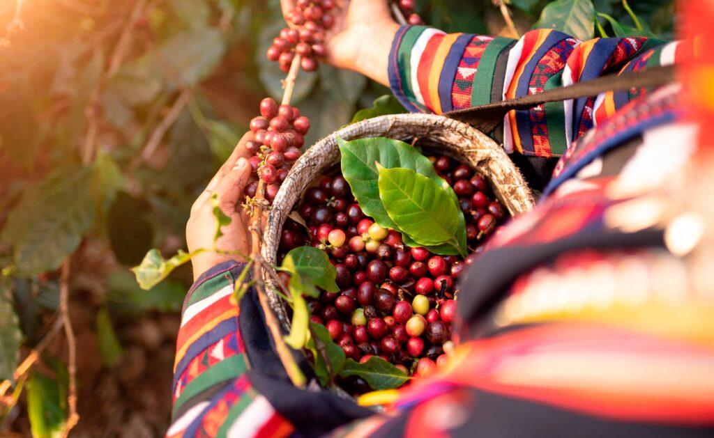 sostenibilidad-bbva-comercio-justo