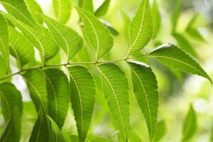 Azadiractina-insecticidas-sostenibilidad-bbva