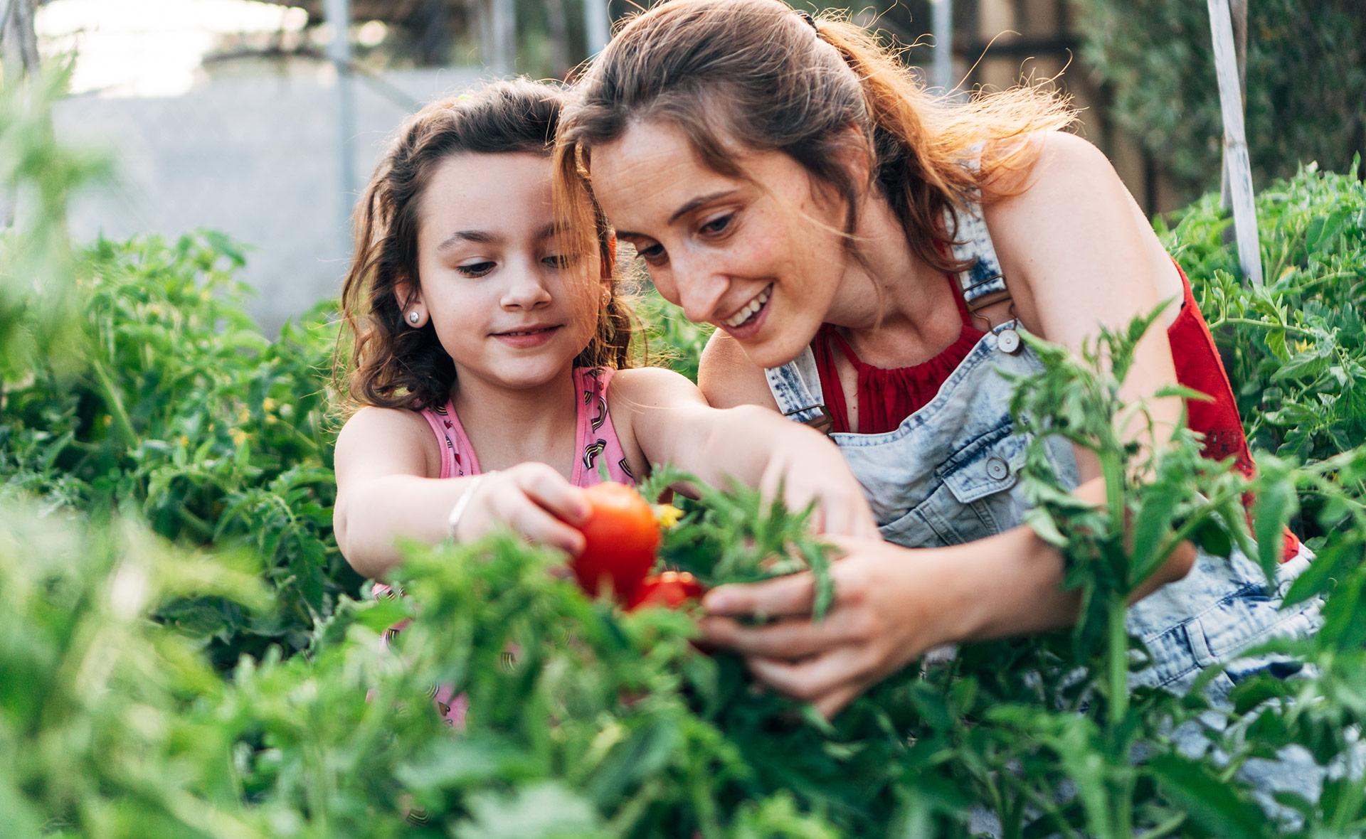 BBVA-cultivo-hortalizas-casa-sostenibilidad-futuro-alimentos-huertos-urbanos