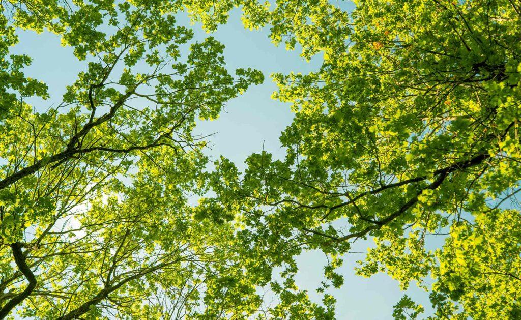 pyme-descarbonizacion-climate-hub-bbva-sostenibilidad