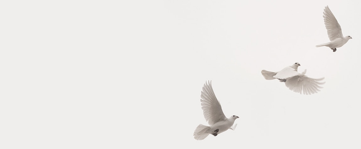 Image of Peace Process Colombia FARC Doves