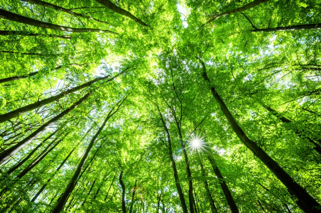 Picture of Sustainability ecology green nature investment trees resource BBVA