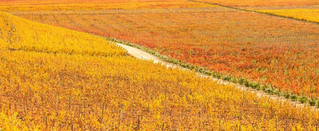Picture of wine route landscape wheat field nature resource santa cruz chile BBVA